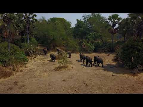 Mvuu Camp | Liwonde National Park | Malawi