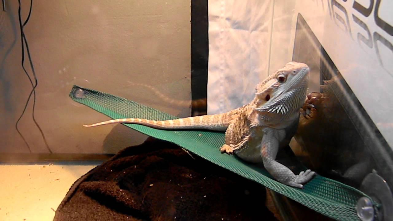 yaddle trying to climb on hammock   youtube  rh   youtube