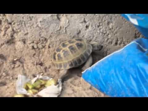 Оргазм черепахи прикол фото 171-941