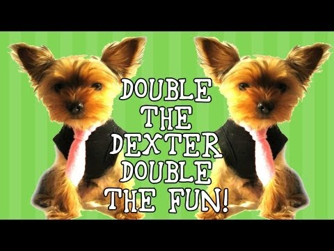 Valentine's Cupid: Funny Talking Dog Video