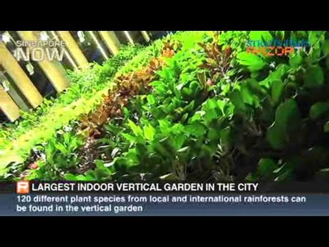Largest indoor vertical garden in the city