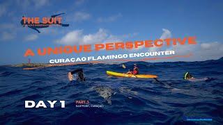 A Curaçao Flamingo Encounter | Day 1 | The Suit Curacao Vlog