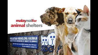 Malay Mail For : Animal Shelters