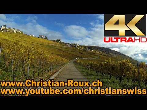 UHD - Switzerland 295 (Camera on board): Vignoble en Terrasses de Lavaux - La Corniche (Hero3)
