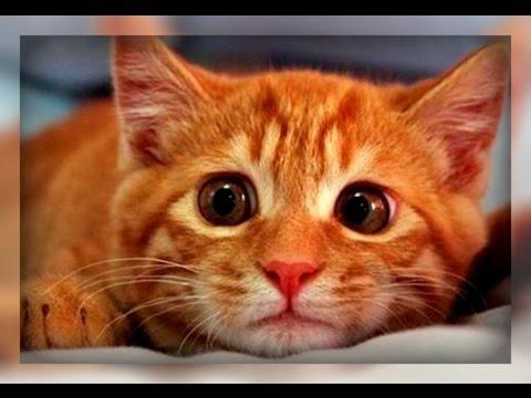 Вопрос: Как отучить взрослого кота ходить в туалет на коврик (см)?