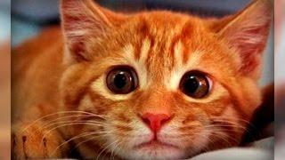 Кот наделал на ковер... Как отучить негодника пакостить в неположенном месте