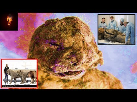 Scientists To Clone Prehistoric Giant Cave Lion?