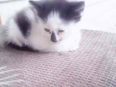 кошки скачать картинки
