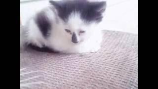 Обычные кошки