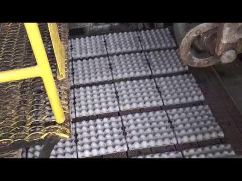 Оборудование для производства тары для яиц
