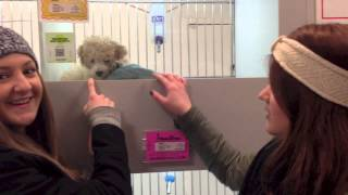 PUPPY STORE Adventure Vlog(, 2013-02-04T23:10:27.000Z)
