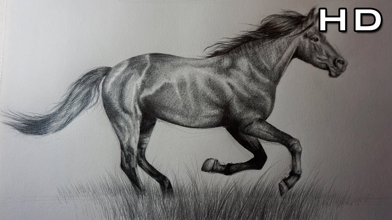 How to draw a horse with pencil step by step for beginners
