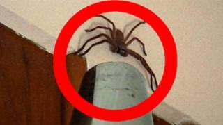 Big Spider Attacks Daddy Vacuum Shooter thumbnail