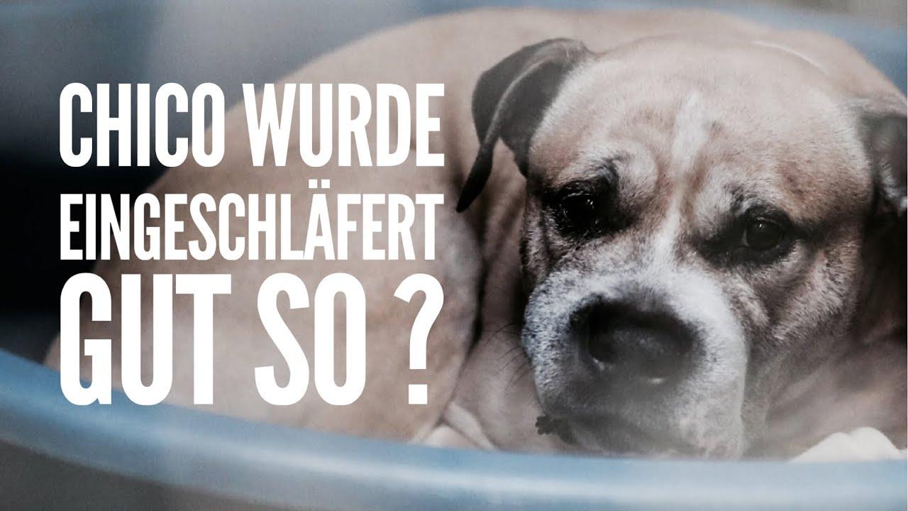 Hund einschläfern ja oder nein