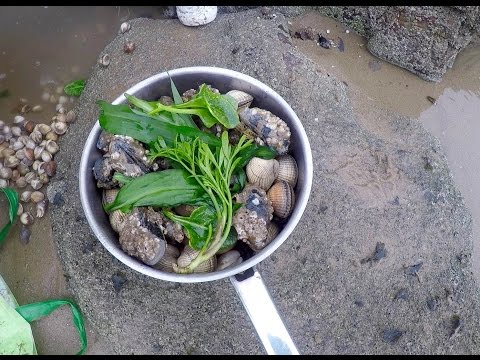Coastal foraging with Craig Evans (razor fish, clams and wild greens)