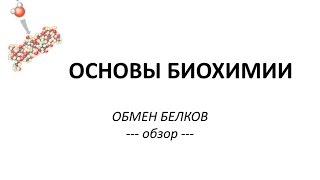 ОБМЕН БЕЛКОВ - часть 1 - Просто о сложном - Химия