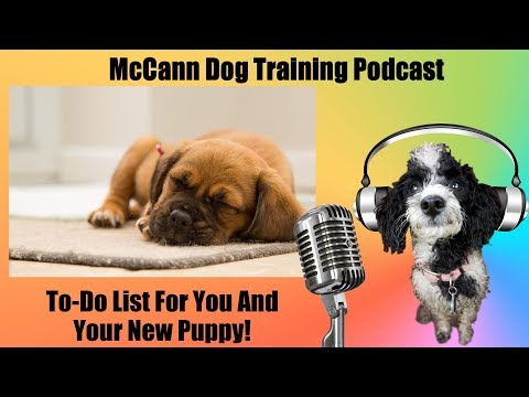 To-Do List for You And Your New Puppy - Dog Training Podcast
