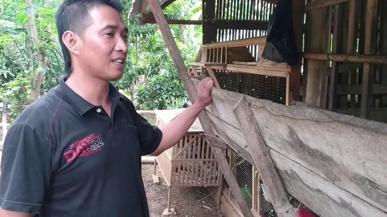 Pasar Kambing Tutup Jual Beli Online Jadi Solusi - Terima Pesanan Kambing  Harga Cocok Siap Kirim