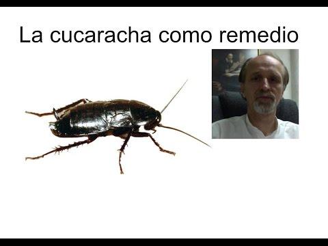 La cucaracha como remedio natural