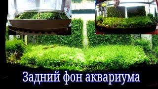 Задний фон аквариума / Moss