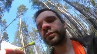 видео Лесные травы