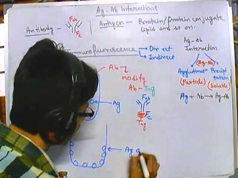 Immunofluorescence