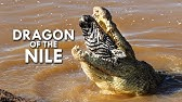 Crocodiles: Survivors of the Last Extinction