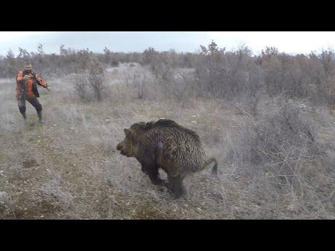 Bol Aksiyonlu  domuz avı.Wild boar hunting