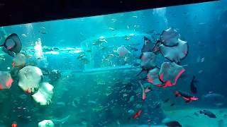 여수 아쿠아리움 아쿠아플라넷 공연 잠수부와 가오리쇼