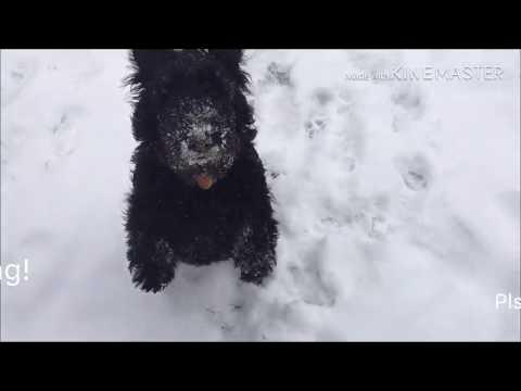Best Dog - Scottish Terrier  Love