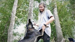 """Бездомные животные — как глобальное потепление (проект """"Смсфинанс"""" и Базы реабилитации животных)"""