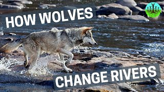 How Wolves Change Rivers thumbnail