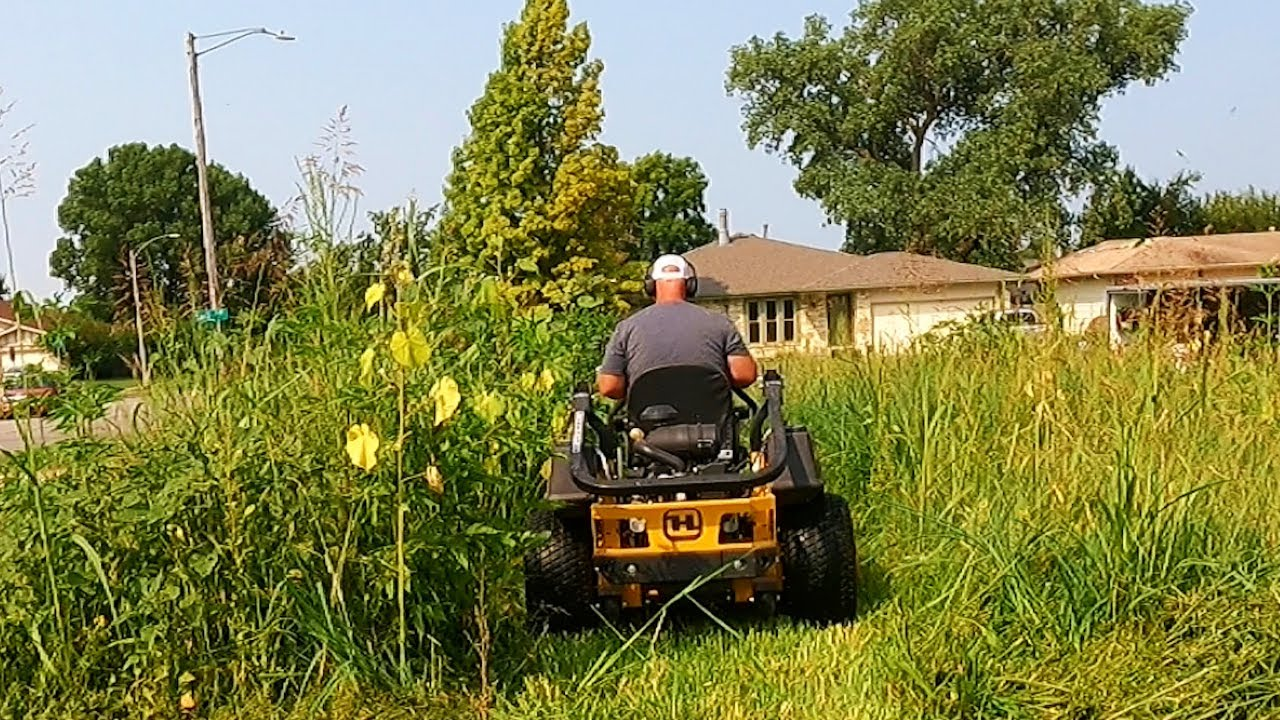 Get This TALL GRASS Cut Before It Becomes A CITY VIOLATION