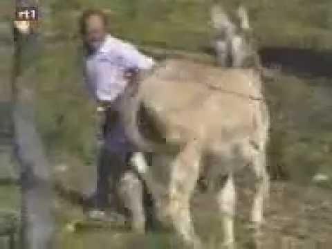 Страстная ебля девушки с лошадью » ПОРНО- ОНЛ@ЙН