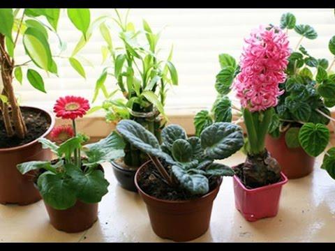 Народные приметы про цветы