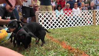 Wilmington Wiener Dog Race