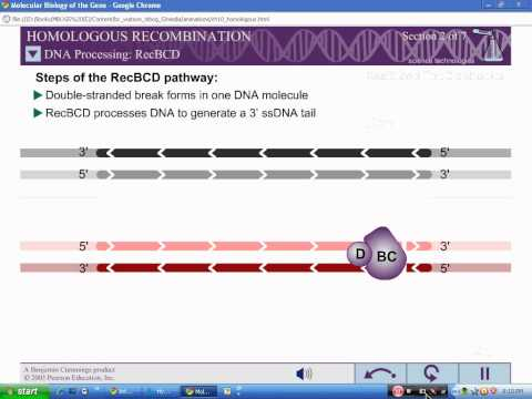 Homologous Recombination Part 1