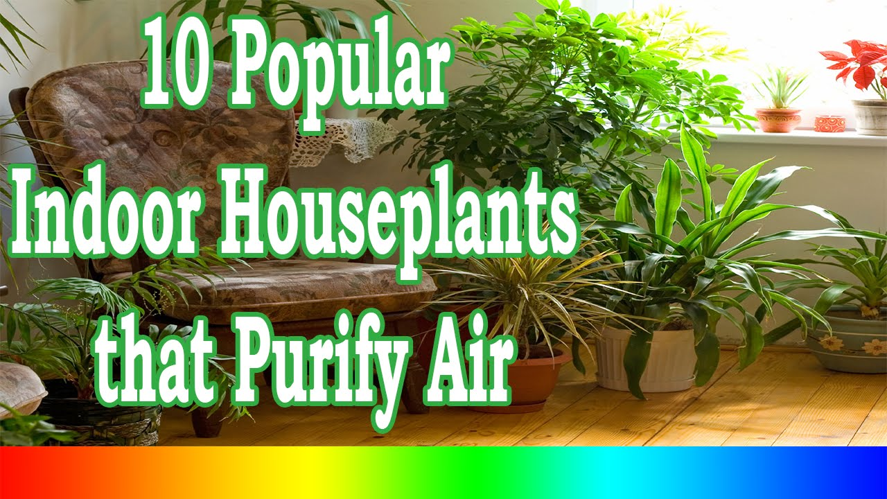 best indoor plants 10 popular indoor houseplants that purify air youtube