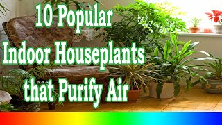 Best Indoor Plants - 10 Popular Indoor Houseplants that Purify Air