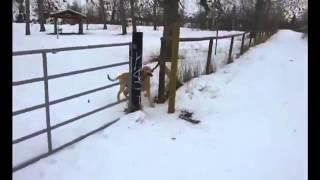 First World Dog Problem Hilarious!- Viral Episode #4