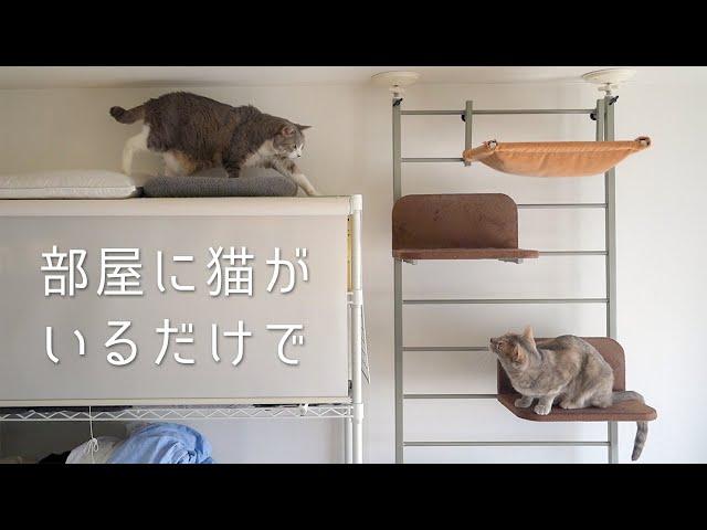 部屋に猫がいるだけで日常はそこそこ楽しい | #モアクリ Vlog050