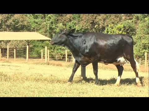 Lote 61   0503 AW
