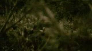 Wild Ocean - Deo (PV feat. Tara Blaise)