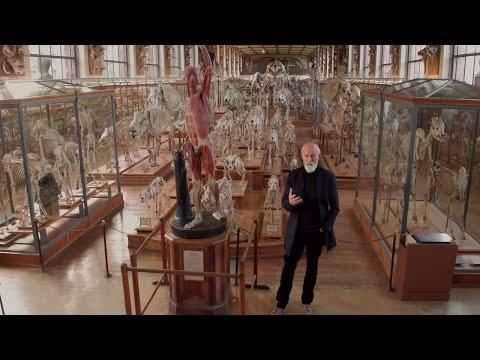 Entretien avec Ross Lovegrove | Exposition | Centre Pompidou