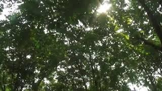 Download LAW KANA BAINANAL HABIB - JOHAN PRATAMA Mp3