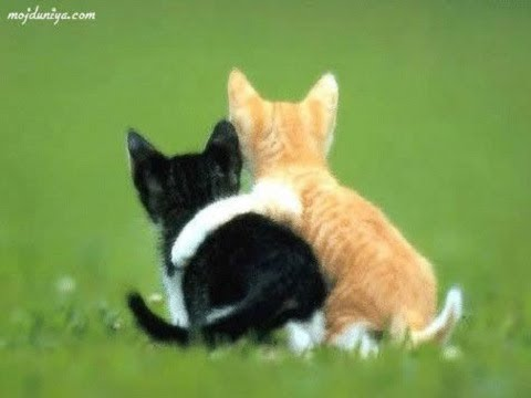 Cute cat and dog funny videos 2018 – FunnyAnimals