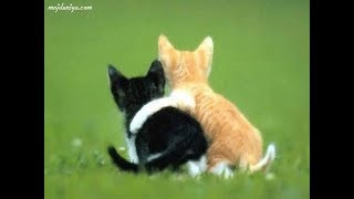 Cute cat and dog funny videos 2018 - FunnyAnimals