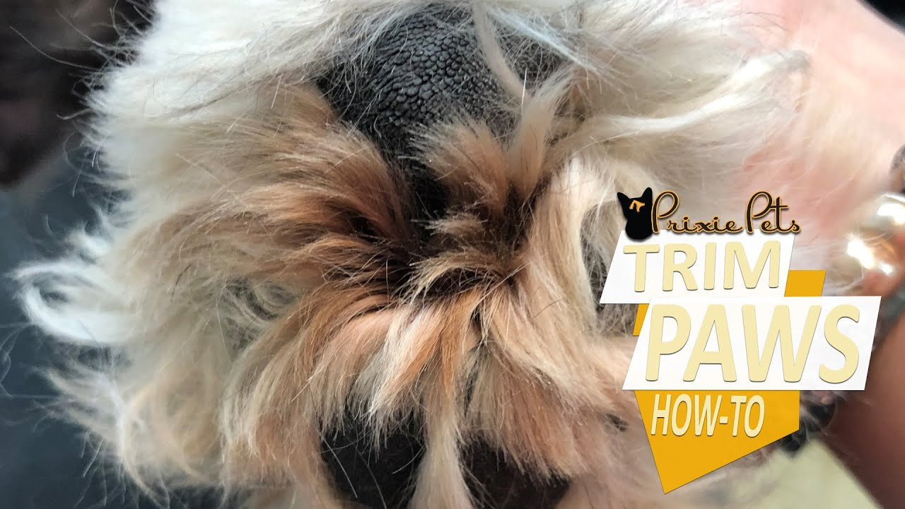 Hairy Dog Paw Pads - How to Trim Hair Between Toes