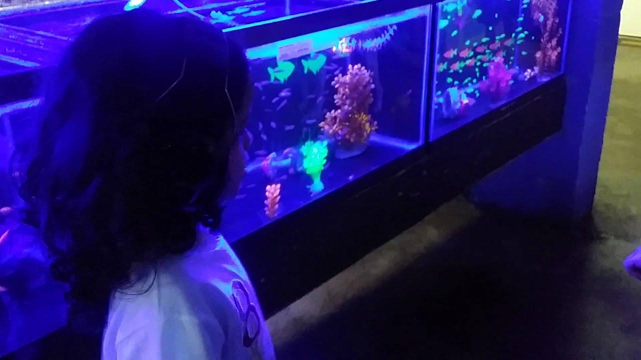 Glow in the dark fish tank youtube for Glow in dark fish