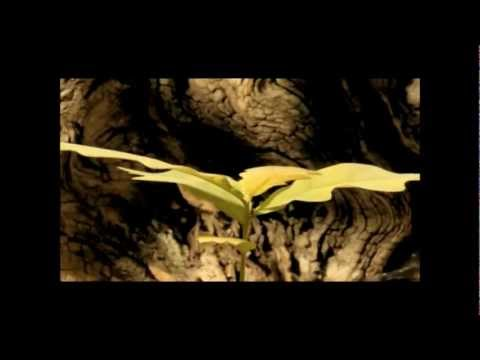 Secret Garden - Reflection (Music Video) mp3